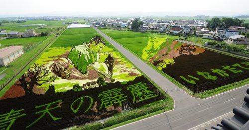 This Japanese Village Creates Massive Rice Paddy Art Every Year