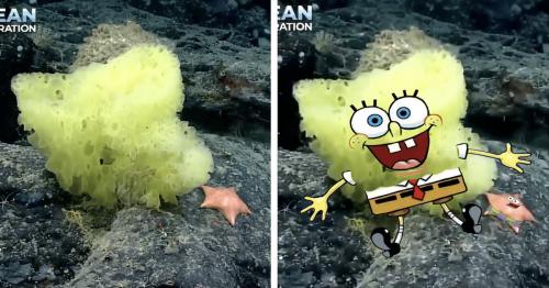 Scientists Spot Real-Life SpongeBob and Patrick Deep in the Atlantic Ocean