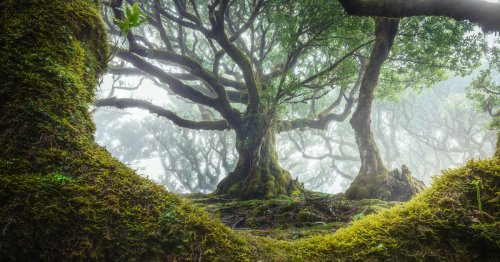 Enchanting Photos of Madeira's Ancient Fanal Forest Filled With 500-Year-Old Trees