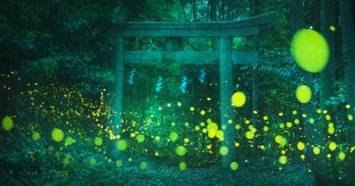 Photographer Captures Magical Dance of Fireflies Lighting Up a Forest in Japan