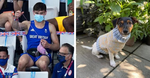 British Diver Tom Daley Goes Viral for Knitting a Dog Sweater in the Stands at Tokyo Olympics
