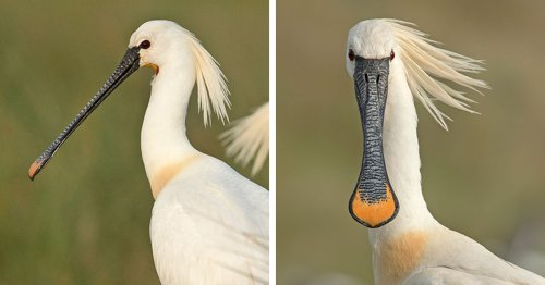 Wildlife Photographer Reveals How Elegant Birds Look a Lot Sillier From the Front