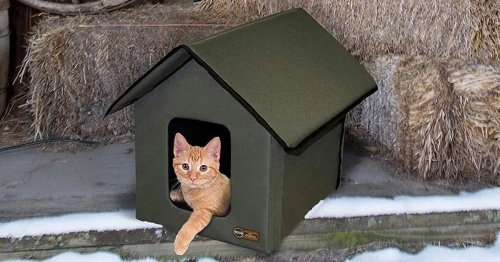 Heated Cat House Provides a Cozy Place for Outdoor Cats To Rest