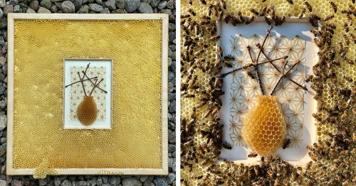 Artist Offers Her Work to Bees for an Unlikely Creative Collaboration With the Insects