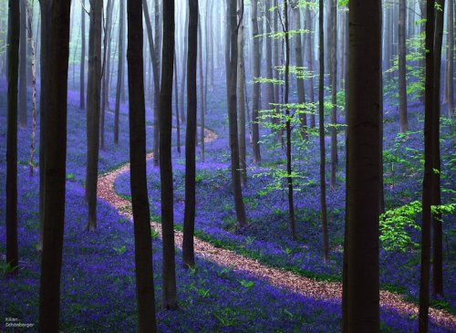 Breathtaking Photos of the Blue Forest in Belgium