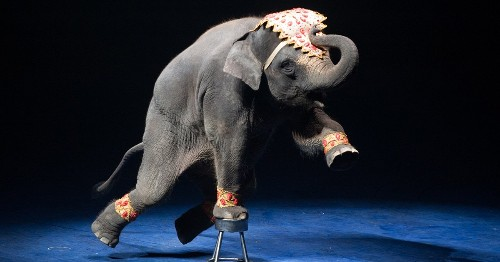 France Bans the Use of Wild Animals in Traveling Circuses