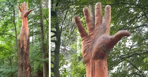 Artist Uses a Chainsaw to Transform a Damaged Tree Into a Giant Hand Reaching Towards the Sky