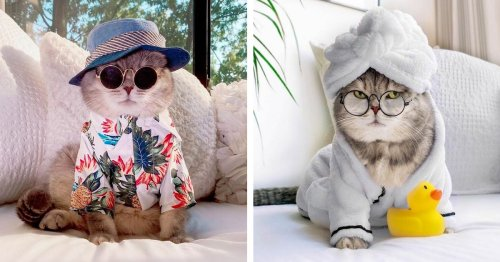 This Fashionable Feline Went From Living on the Streets To Becoming an Instagram Model