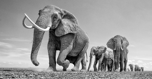 Photographer Showcases the Majestic Beauty of Elephants To Help in Their Conservation [Interview]
