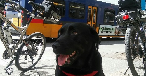 This Dog Takes the Bus by Herself Every Day to Walk Around at the Park