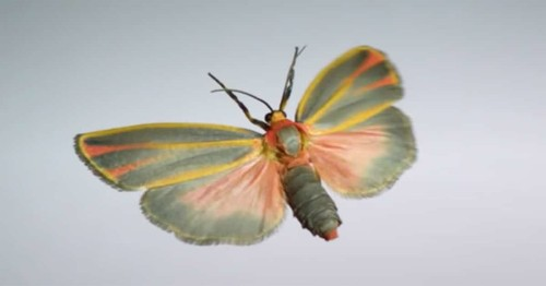 Watch a Cast of Insects Take Flight in This Extreme Slow-Motion Video Filmed at 3,200 FPS