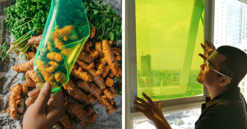 Student Creates Solar Panels Made From Food Waste That Can Produce Energy Even on Cloudy Days