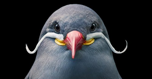 Stunning Portraits of Rare and Endangered Birds Full of Personality