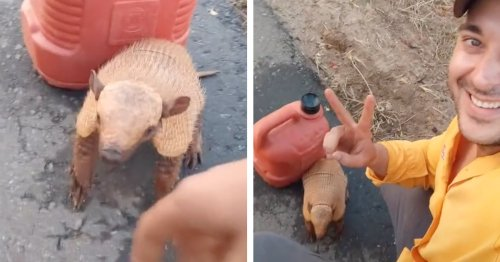 Viral TikTok Video Shows Motorcyclist Befriending a Thirsty Armadillo on a Busy Highway