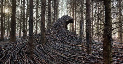 Undulating Waves of Deadwood Take Over a Secluded Forest in Germany