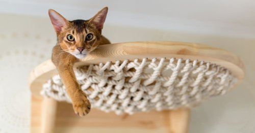 How to Craft a Kitty Playground With Your Own DIY Cat Tower