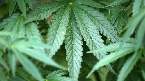 Das Cannabis-Verbot kann dann mal weg