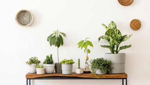 Diese 7 Zimmerpflanzen setzen tolle Akzente