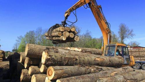 Holzpreise boomen, Waldbesitzer leiden