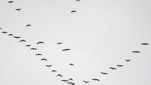 Viele Zugvögel ziehen nicht mehr