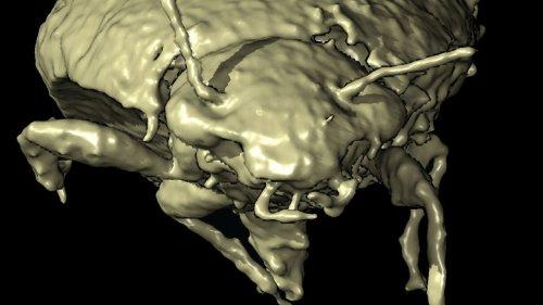 Käfer stecken in versteinertem Dinokot
