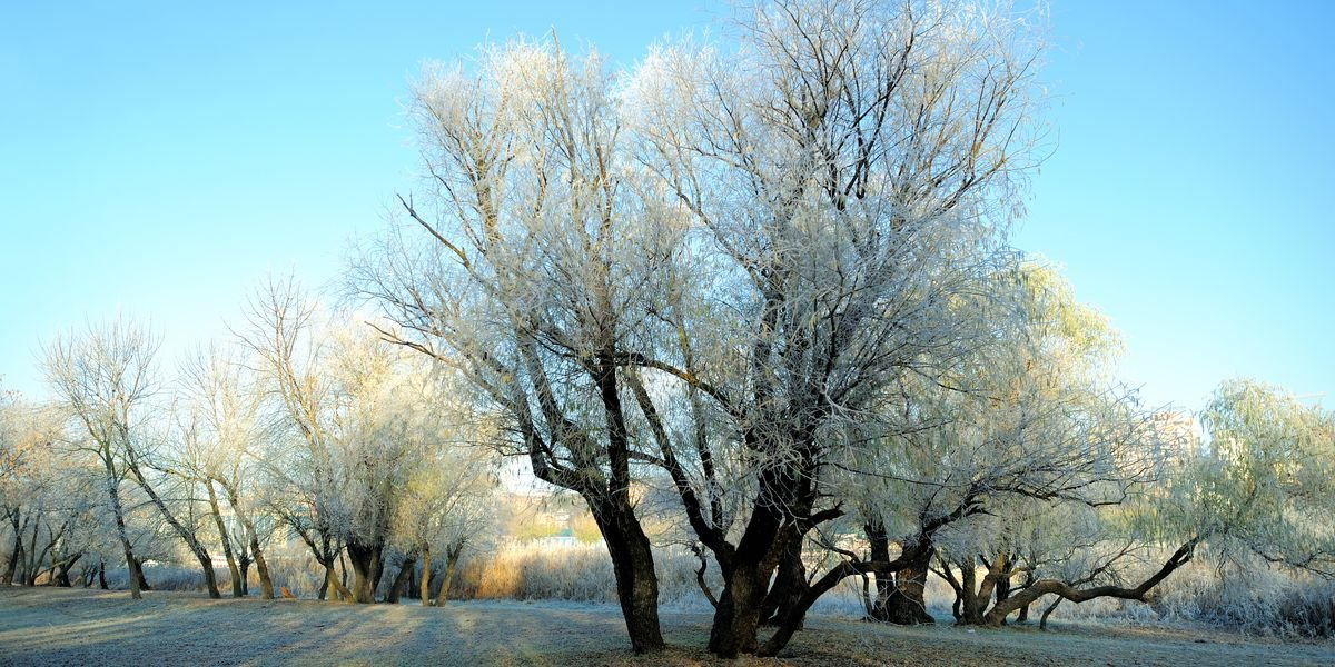 A Frost Advisory Has Been Issued For Parts Of Ontario & It's Going To Be Chilly
