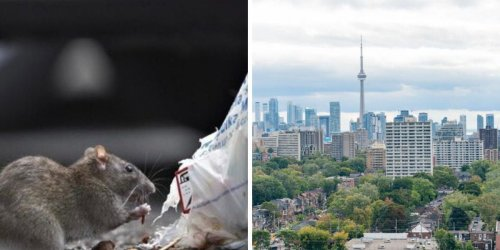 Ontario's 'Rattiest' Places Have Just Been Revealed & Even Smaller Cities Are On The List