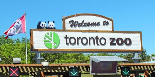 The Toronto Zoo Is Hosting A Pop-Up Vaccine Clinic Today & Plenty Of Spots Are Available