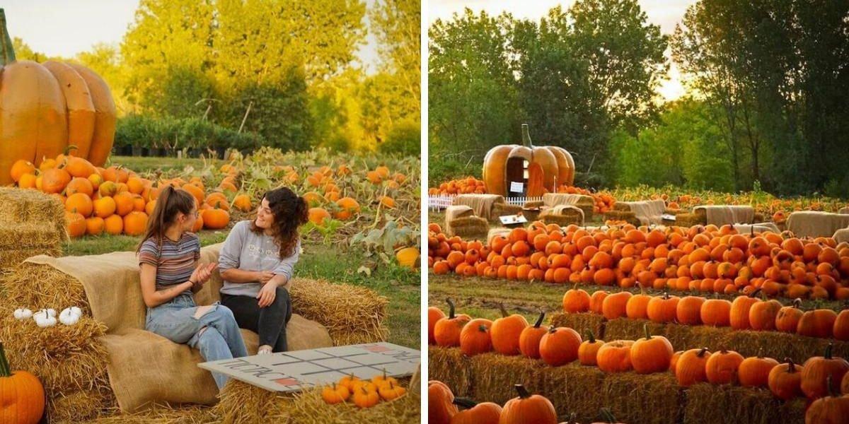 Ce champ de 50 000 citrouilles à Laval est à mettre sur ta « bucket list » de l'automne