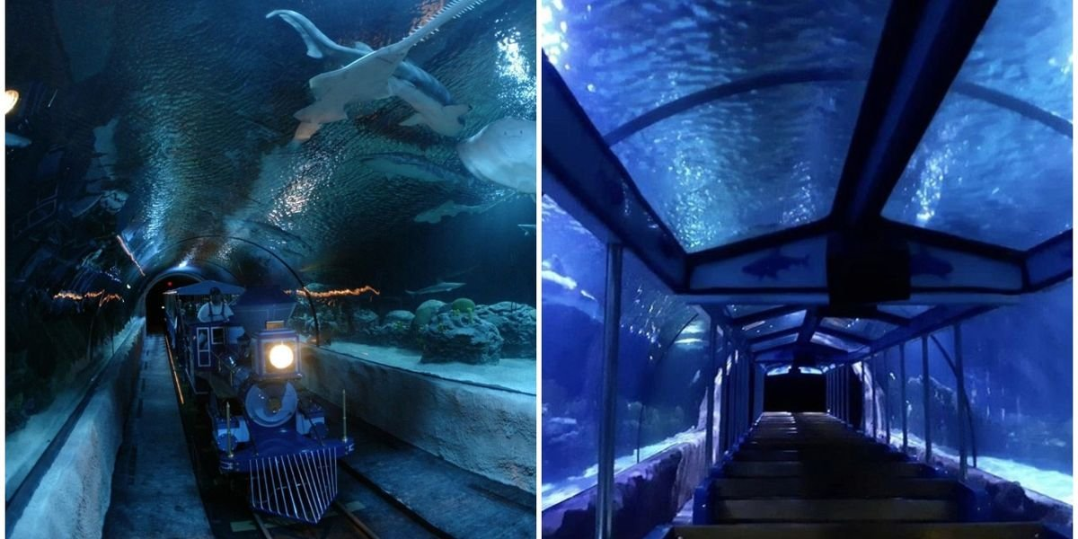 Shark Voyage At Downtown Aquarium Houston Takes You On An Underwater Train Ride (VIDEO)