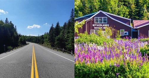 7 Scenic Routes In Canada Where You Can Drive Around & See Spring In Full Bloom