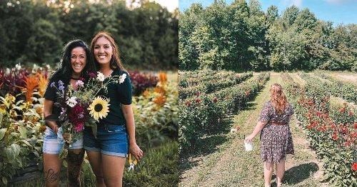 Tu peux cueillir des fleurs colorées dans ces champs près de Montréal cet été