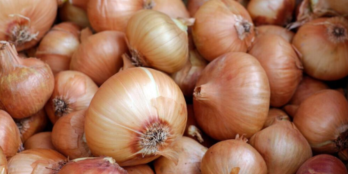 Ces oignons vendus au Québec pourraient te rendre très malade ou te tuer