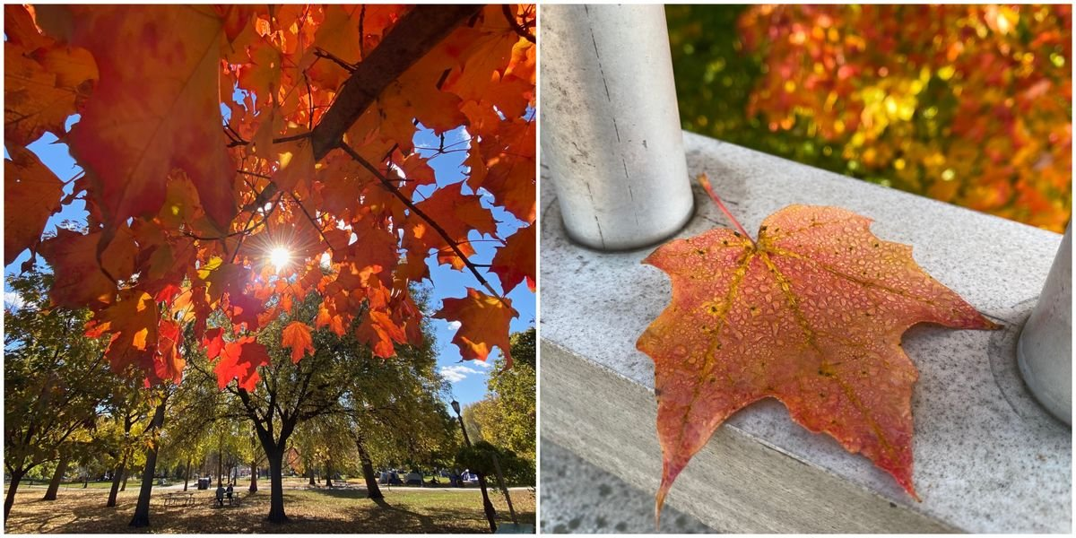 This Is Toronto's Most Beautiful Weekend Of The Year So Get Out There! (PHOTOS)