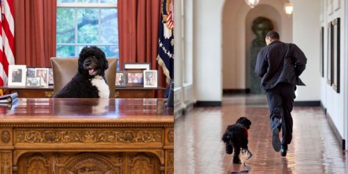 Barack Obama's Dog Has Died & The Family's Tributes Will Break Your Heart (PHOTOS)