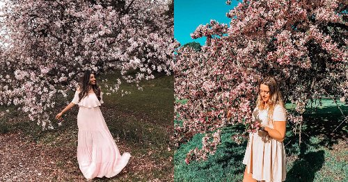 This Is Where You Can Find Gorgeous Pink Magnolias & Cherry Blossoms In Ottawa