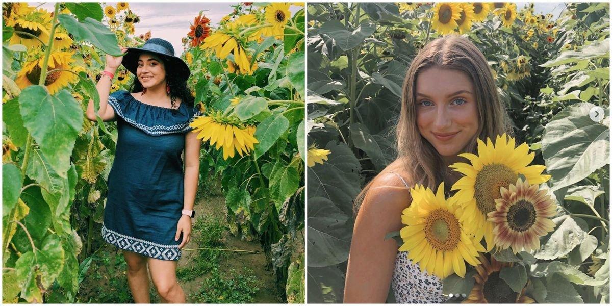 A Sunflower Farm Near Houston Lets You Pick Them For $1 Each