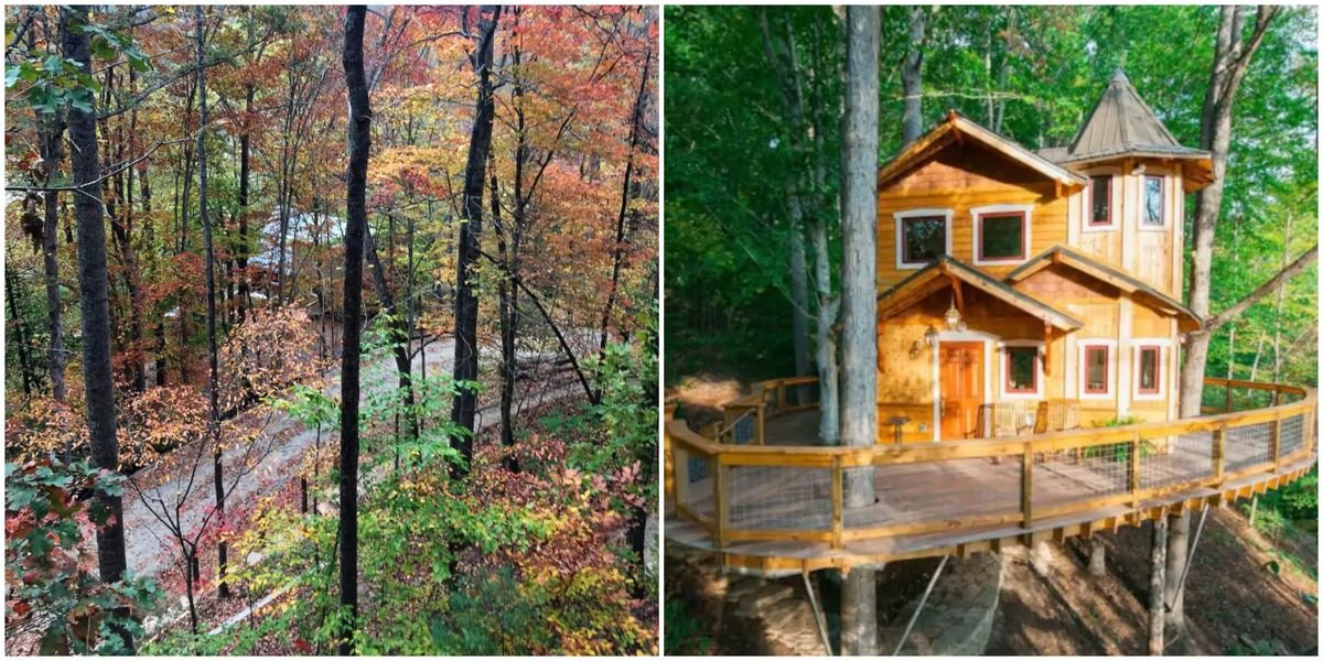 You Can Stay In A Real-Life Magic Treehouse This Fall In North Carolina