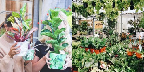 7 places où trouver mille et une plantes vraiment pas chères sur la Rive-Sud de Montréal