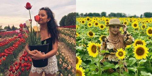 7 champs de fleurs à moins de 2 h de Montréal à mettre sur ta « bucket list » de l'été