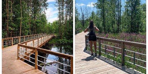 Tu peux te balader sur des passerelles en pleine nature sur la Rive-Sud de Montréal