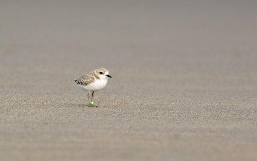 Audubon Chapters Taking Local Action for Birds and People in the Arid West