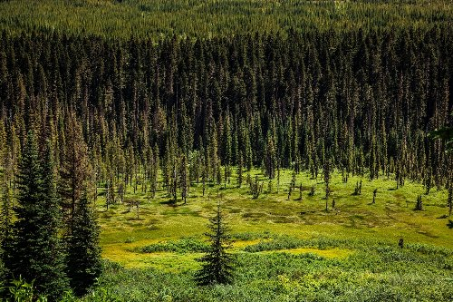 'Forest gardens' show how Native land stewardship can outdo nature