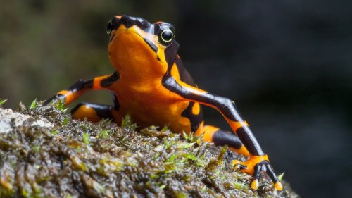 These animals offer key clues for environmental change