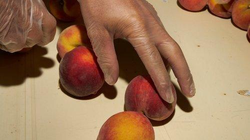 Can the iconic Georgia peach keep growing in a warming South?