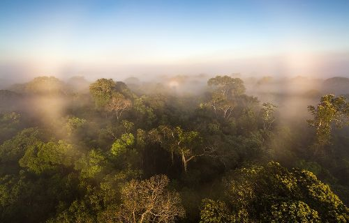 First-ever study of all Amazon greenhouse gases suggest the forest is worsening climate change