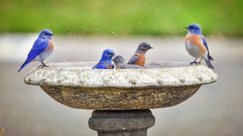 Why a backyard that's 'for the birds' is great for kids, too