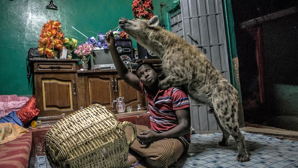 Meet the man who lives with hyenas