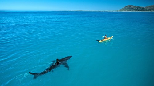 My shark photo took over the internet, inspiring countless fakes and real awareness