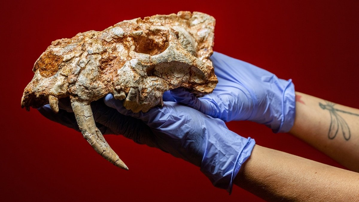 See the fabulous fossils unearthed in a garbage dump